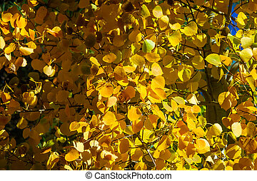 Detail of colorful fall leaves