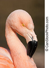 Detail of cuban flamingo