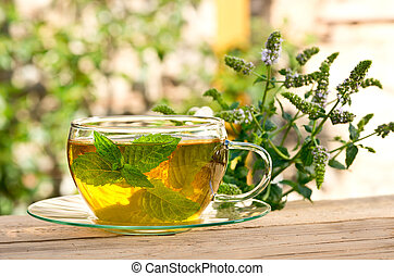 Detail of cup of tea with peppermint plant