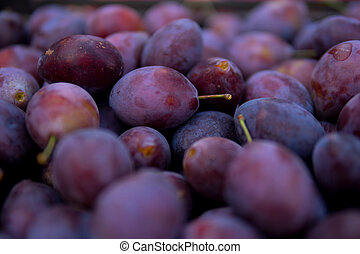 detail of damson plums - close up of large number of damson ...