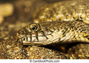 detail of dice snake head