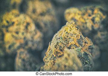 Detail of dried cannabis buds - medical marijuana concept - ...