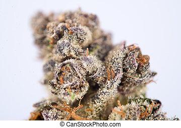Detail of dried cannabis flower (space cookies strain)...