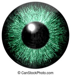 Detail of eye with green colored iris and black pupil