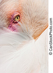 Detail of Flamingo