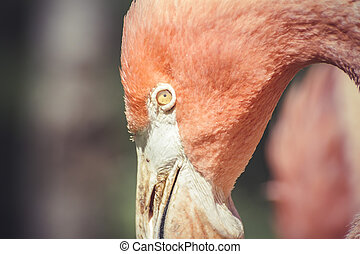 detail of flamingo head with long neck