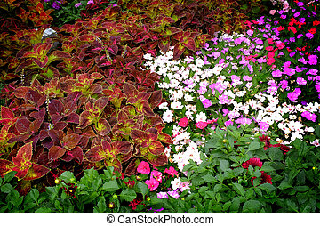 Detail of Flower Garden in Summer or Spring with Lush Blooms and Colorful Leaves