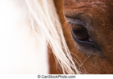 Detail of horse's eye