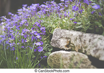 large quantity of small purple flowers