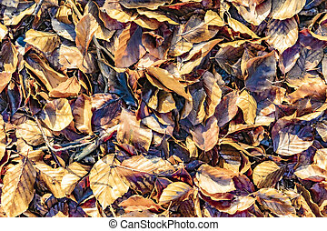 detail of leaves in bright sun at the Taunus forest in autumn mood