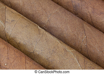 Detail of luxury Cuban cigars in the box