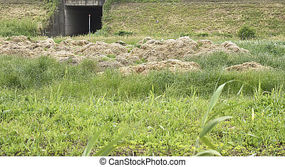 manure - detail of manure in a meadow in la spezia