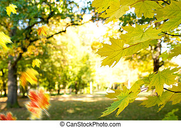 Detail of maple leaves in the park in autumn