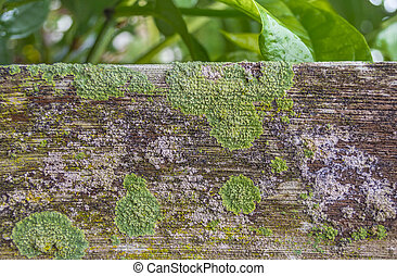 detail of moss and lichen on fence