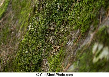 detail of moss covering sandstones