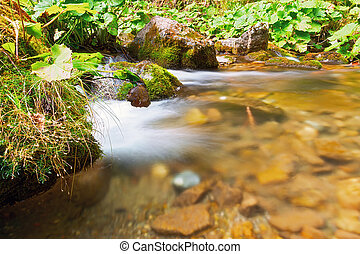 detail of mountain stream in Apuseni