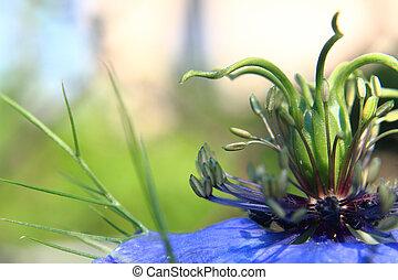 detail of nice blue flower