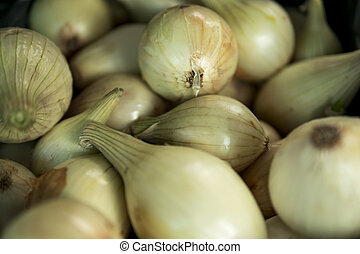 detail of onion