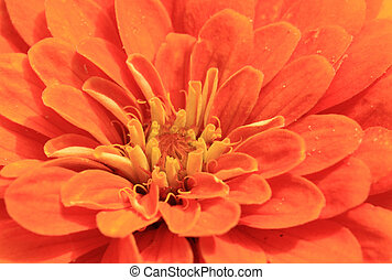 detail of orange flower