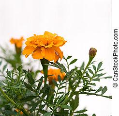 detail of orange flowers