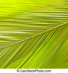 detail of palm tree leaf