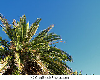 detail of palm
