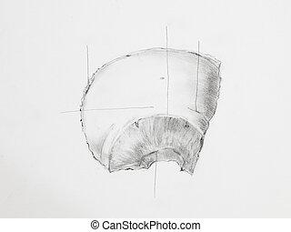 Detail of parietal bones pencil drawing on white paper