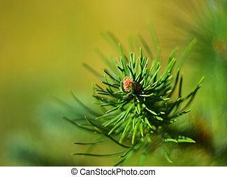 Detail of pine tree