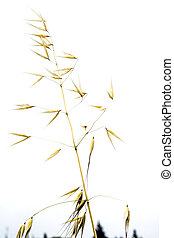 Detail of plant in wheat field