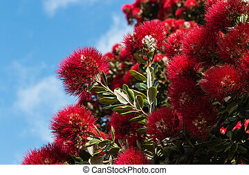 detail of Pohutukawa tree flowers