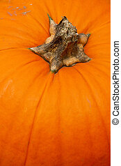 detail of pumpkins