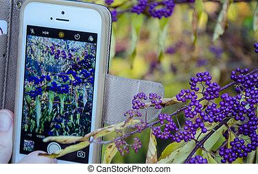 Detail of purple berries