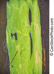 Detail of Rainbow Eucalyptus