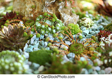 Detail of rock garden - Beautiful rock garden cultivated...