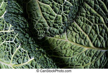 Detail of Savoy cabbage leaves