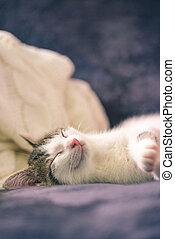 Detail of sleeping white kitten with tabby spots on head