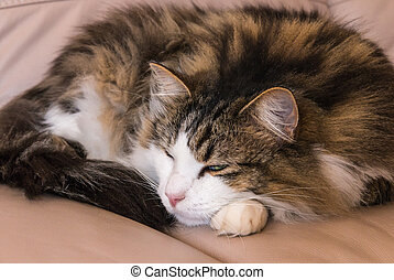 tabby cat resting on beige leather sofa