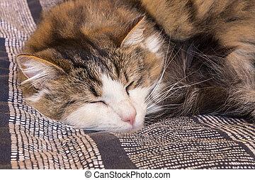 tabby cat sleeping on blue duvet cover