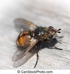 Detail of the fly