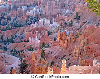 Detail of the forest of red and white peaks, Bryce National Park, United States