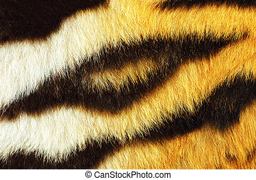 detail of tiger fur texture