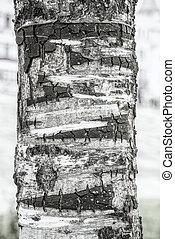 Detail of Tree Bark