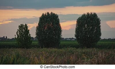 Detail of Trees in crop