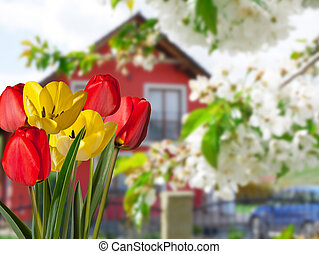 Detail of tulips with a house in the background