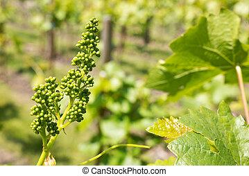 detail of vineyard