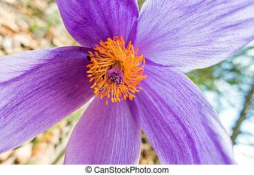 Violet flower - macro view