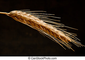 Detail Of Wheat On The Dark Background
