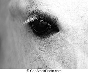 Detail of white horse head