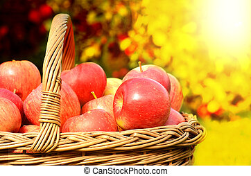 Detail of wicker basket full of red apples at sunset
