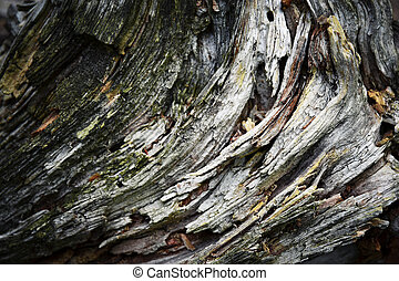 detail on old rotten wood - abstract background or texture...